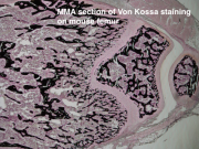 Histology & Histomorphometry Services