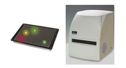 Cell Signaling Assay Services